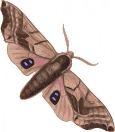 Moth clip art
