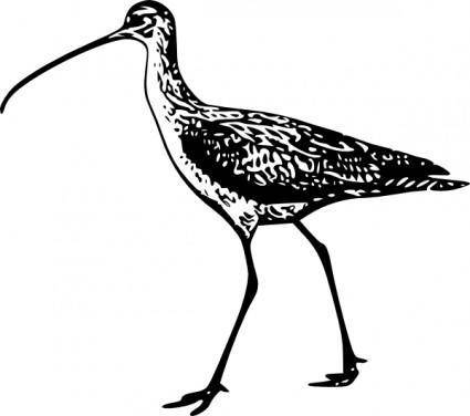 free vector Walking Bird clip art