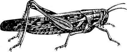 Locust clip art