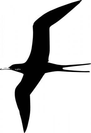Frigate Bird clip art