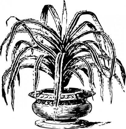 Candelabrum Tree clip art