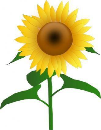 Sunflower Jh clip art