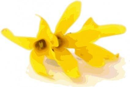free vector Forsythia clip art