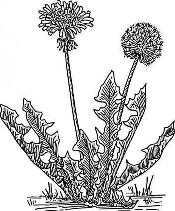 free vector Dandelion Grass clip art