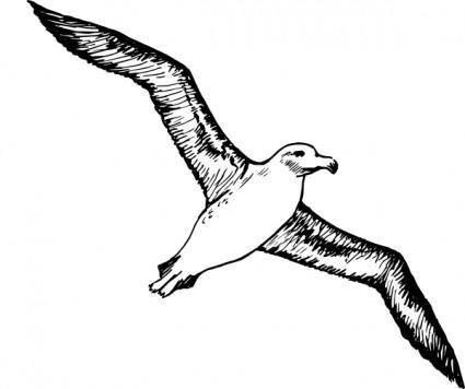 free vector Albatross clip art
