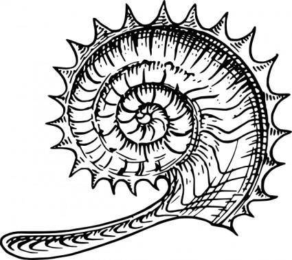 free vector Ammonite clip art