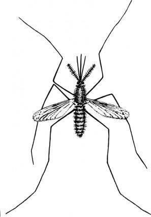 free vector Mosquito clip art