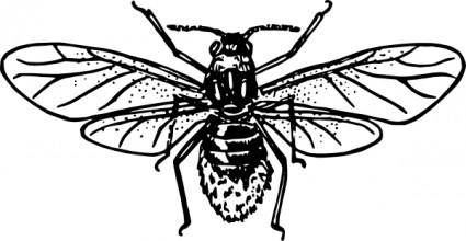 free vector Aphid clip art