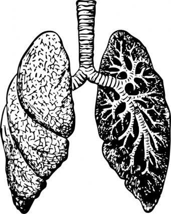 free vector Lungs clip art