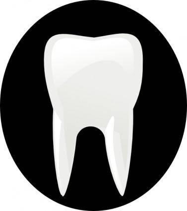 free vector Tooth Molar clip art