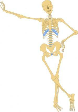 free vector Human Skeleton Outline clip art