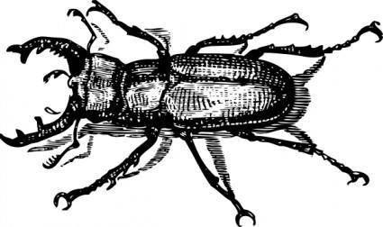 Staghorn Beetle clip art