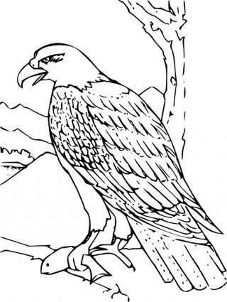 free vector Coloring Book Bald Eagle clip art