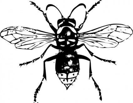 free vector Bald Faced Hornet clip art