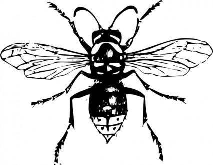 Bald Faced Hornet clip art