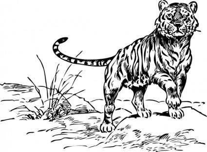free vector Tiger clip art