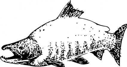 Sockeye Salmon clip art