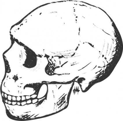 Skull Grayscale clip art