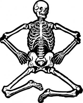 Human Skeleton clip art