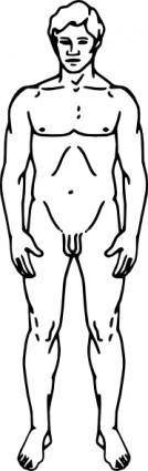 Line Drawing Of A Human Male clip art