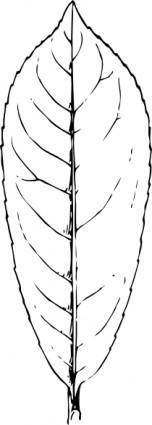 free vector Laurel Leaf clip art