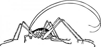 Cricket clip art