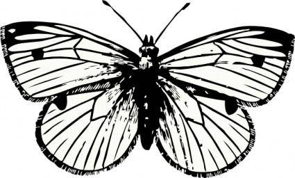 free vector Cabbage Moth clip art