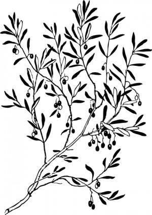 Olive Branch clip art 109095