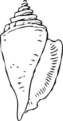 Seashell clip art