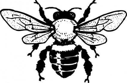 free vector Honey Bee clip art