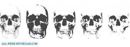 free vector 6 Layer Skull