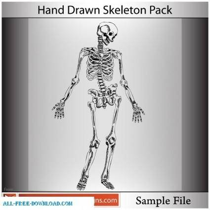 Hand Drawn Skeleton