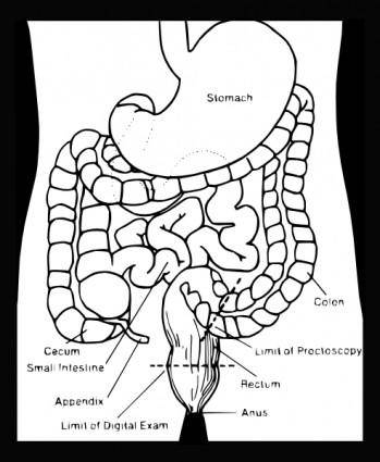 free vector Digestive System clip art