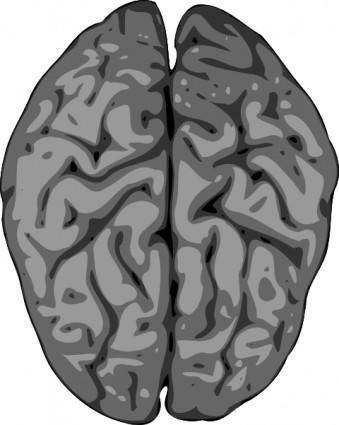 Grey Brain clip art