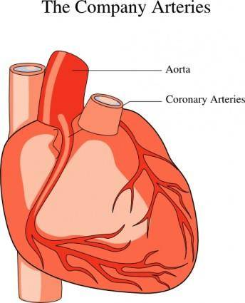 Heart Medical Diagram clip art