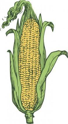 Ear Of Corn Colored clip art