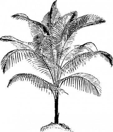Miniature Coconut Palm clip art