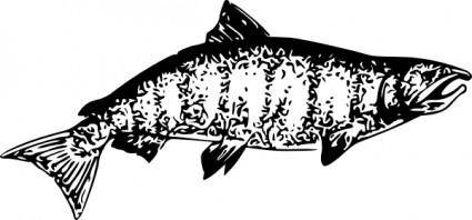 free vector Chinook Salmon clip art