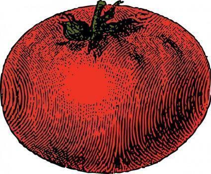 Tomato clip art