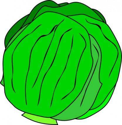 Whole Lettuce clip art