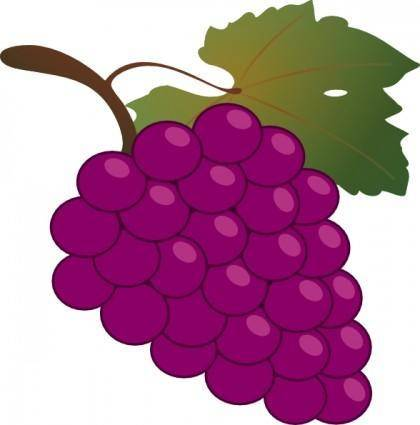 free vector Grape clip art