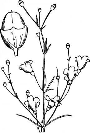 Agalinis Obtusifolia clip art