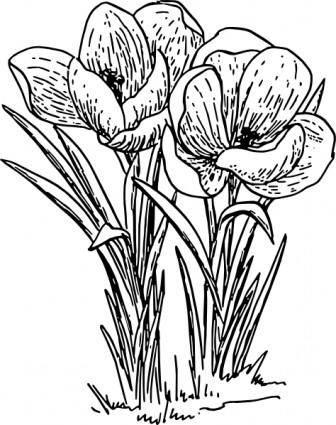 free vector Rose Flower Crocus  clip art