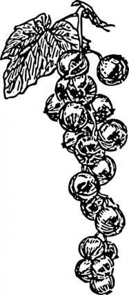 free vector Grape Vine clip art