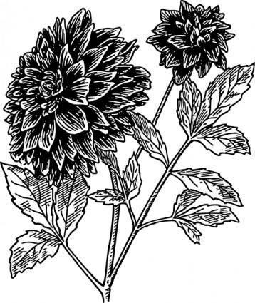 free vector Dahlia clip art