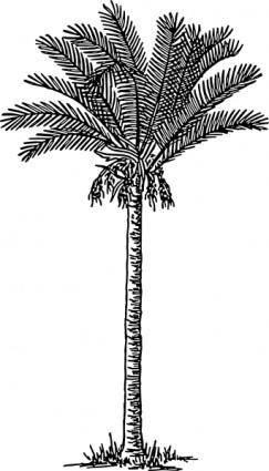 free vector Date Palm clip art
