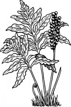 free vector Fern clip art