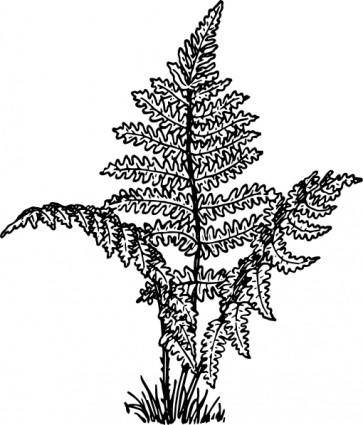 free vector Fern Plant clip art