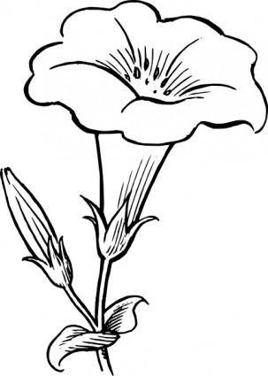 free vector Gamopetalous Flower clip art