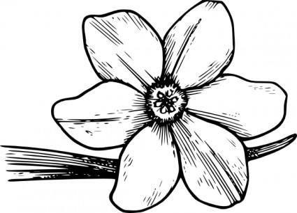 Corolla clip art